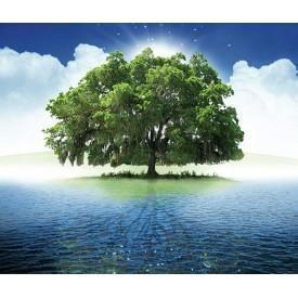 De Groene Linde, Innerlijke rust auraspray 50 ml Overige gezondheidsproducten